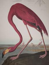 Audubon - American Flamingo - Birds of America - Ariel Press FOLIO