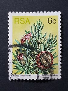 South Africa: 1977 Succulents; 6c - P. canaliculata fine used; SG419b