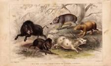 Animals Original Art Prints Copper Plate