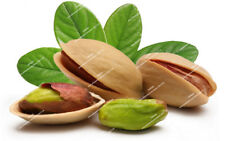 Nut tree Pistachio seeds 5 Pcs rare outdoor fruit tree seeds tropical plant seed
