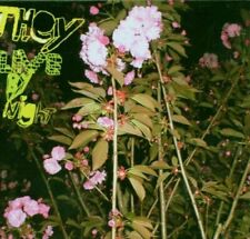They Live By Night Same (e.p., 2005, #razzia019, digi)  [Maxi-CD]