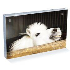 "Beautiful Cheeky White Horse Photo Block 6 x 4"" - Desk Art Office Gift #16239"