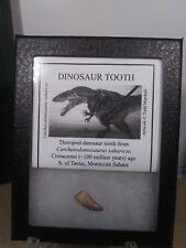 Carcharodontosaurus Sahrarucus Tooth