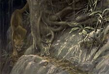 Robert Bateman PATH OF THE PANTHER  Sold Out Limited Edition