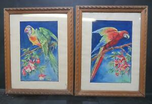Antique Parrot Paintings 1930s French Pair Wildlife Art Signed Research!