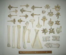 Lot of Real Animal Bones Vertebrae Deer Goat Sheep Cow Ram Elk Mammal Taxidermy