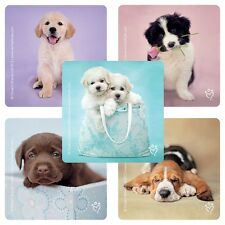 Puppy Dog Stickers x 5 - Party Supplies - Favours - Dogs Stickers - Rachael Hale