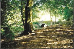 London - Hampstead Heath, Kenwood, woods, bridge on pond - postcard, 2002