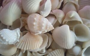 Mixed Shells Lots