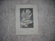 Birds of America Print Icelandor  1986 74/500 by John J. Audubon F,R,S, F,L,S,