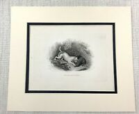 1843 Antique Print Terrier Dog Badger Hunt Hunting Dogs Old Victorian Engraving