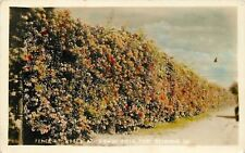 Fort Benning Georgia~Gowdy Field~Fence of Roses~1930s Real Photo Postcard~RPPC