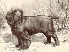 SUSSEX SPANIEL OLD 1934 DOG SEPIA ART PRINT BY NINA SCOTT LANGLEY