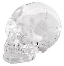 Crystal Scull Figurine Mystic Tallisman Ancient Art Sculpture Bizarre Skeleton