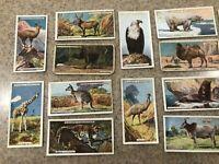 John Player & Sons vintage tobacco cards Natural History set