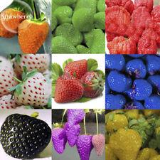 100 Seeds Strawberry Fragaria Fruit Plants Sweet Organic Bonsai in Home Gardens