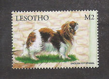 Dog Art Full Body Study Postage Stamp ENGLISH TOY SPANIEL Blenheim Lesotho MNH