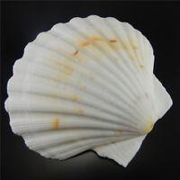 9-12 cm Natural Scallop Shells Aquarium Beach Fish Tank Nautical Decor Ornament