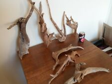 """Driftwood Pieces, x7 random branching """" tree"""" shapes. viv, craft or table centre"""