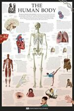 HUMAN BODY ~ DK FACTS 24x36 POSTER Wall Chart Teaching Anatomy Skeleton Science