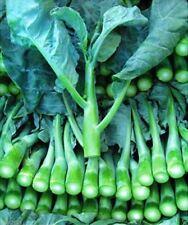 Chinese Broccoli-1000 Seeds,Kai Lan,Gai Lan,Brassica Alboglabra,Open Pollinated