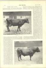 1897 CECIL ALDIN tre VOLPI DEL DESERTO