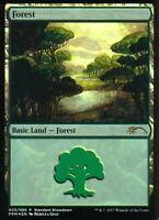 Forest FOIL (Rebecca Guay Art) | NM | Standard Showdown Promo | Magic MTG