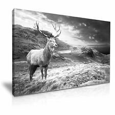 ANIMAL DEER Stag Mountain CANVAS WALL ART PICTURE PRINT A1 dimensioni 76cmx50cm
