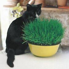 Cat Grass Seeds EU Standart Pot Indoor Easy Fast Grow