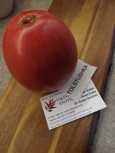 Tolstjushka Tomate aus Russland - Tomato 5+ Samen - Saatgut - Seeds Gemüsesamen