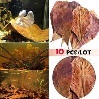 10pcs Natural Terminalia Catappa Foetida Leaves Almond Leaf Aquarium Fish Tank