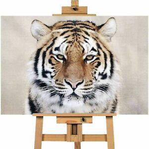 Beautiful Tiger Canvas Print Wall Art