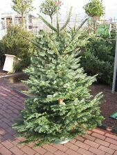 HOW TO MAKE MONEY SELLING CHRISTMAS TREES PLUS 100  SEEDS EACH OF FOUR TREES.