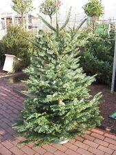 Comment faire de l'argent de vente plus les arbres de Noël. seulement stock £ 12.50