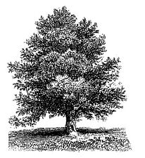 "Clear stamp (2.5""x3"") Oak Tree FLONZ vintage acrylic rubber stamps"