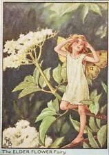 Flower Fairies: The Elder Flower Fairy Vintage Print c1930 by Cicely Mary Barker