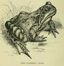 Amphibians Frogs Toads Tadpoles Frog Toad Frogology Newts on CD ROM