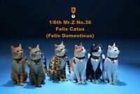 Mr.Z Simulation Animal Model MRZ036 1/6 domestic Cat 6 Colors Soldier Figure Toy