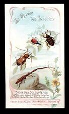 chromo AIGUEBELLE-le monde des insectes-CHARANCON DU SAPIN,ABODERE,ANTHRIDE,BREN