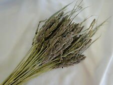 Natural Dried Tapestry Millet Grass Grain Wheat Floral Foliage Flower Stems