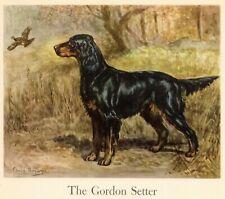 1942 Antique Gordon Setter Dog Art Print Edwin Megargee Gordon Setter Dog 3680K