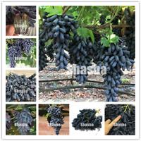 10 Pcs Seeds Black Finger Grape Giant Bonsai Succulent Fruit Tree Garden Plants