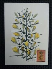 NIEDERLANDE MK 1960 FLORA BLUMEN MAXIMUMKARTE CARTE MAXIMUM CARD MC CM c1505
