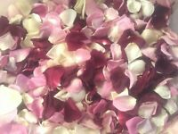 Freeze-Dried Colorful Rose Petals  Best Natural Confetti 5 cups.