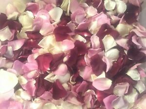 Freeze-Dried Colorful Rose Petals.  Best Natural Confetti 5 cups.