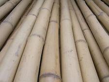 Bambusrohr Bambusstange Bambushalm Bambus Bambusrohre 1 x 3-4 x 2 m / 30-40 mm
