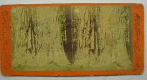 Antique Stereoview Woodward 595 Twin Sisters Grandeur of the Yosemite B8