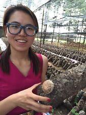 Dried Shiitake Mushrooms  Organic Foods Organic 500g (1.1lb)