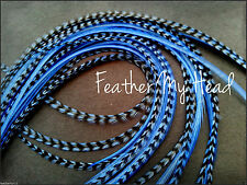 "Super Long 11""- 14"" Feather Extension For Hair,  Whiting Eurohackle, Blue"