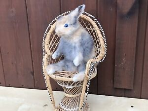 TAXIDERMY Rabbit In Chair